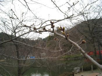 20080325-2.jpg
